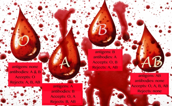 blood type chart.jpg